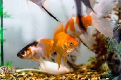 aquariums-1867308_1920